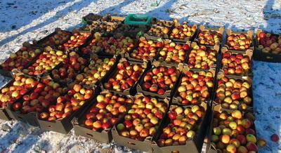 ВРязани уничтожили 8,5 тонн санкционных продуктов